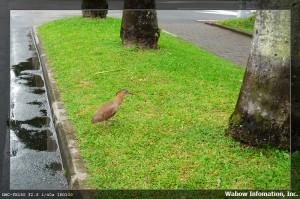 不知名的小鳥 3
